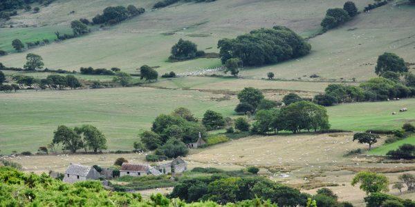 Landschaft in Dorset