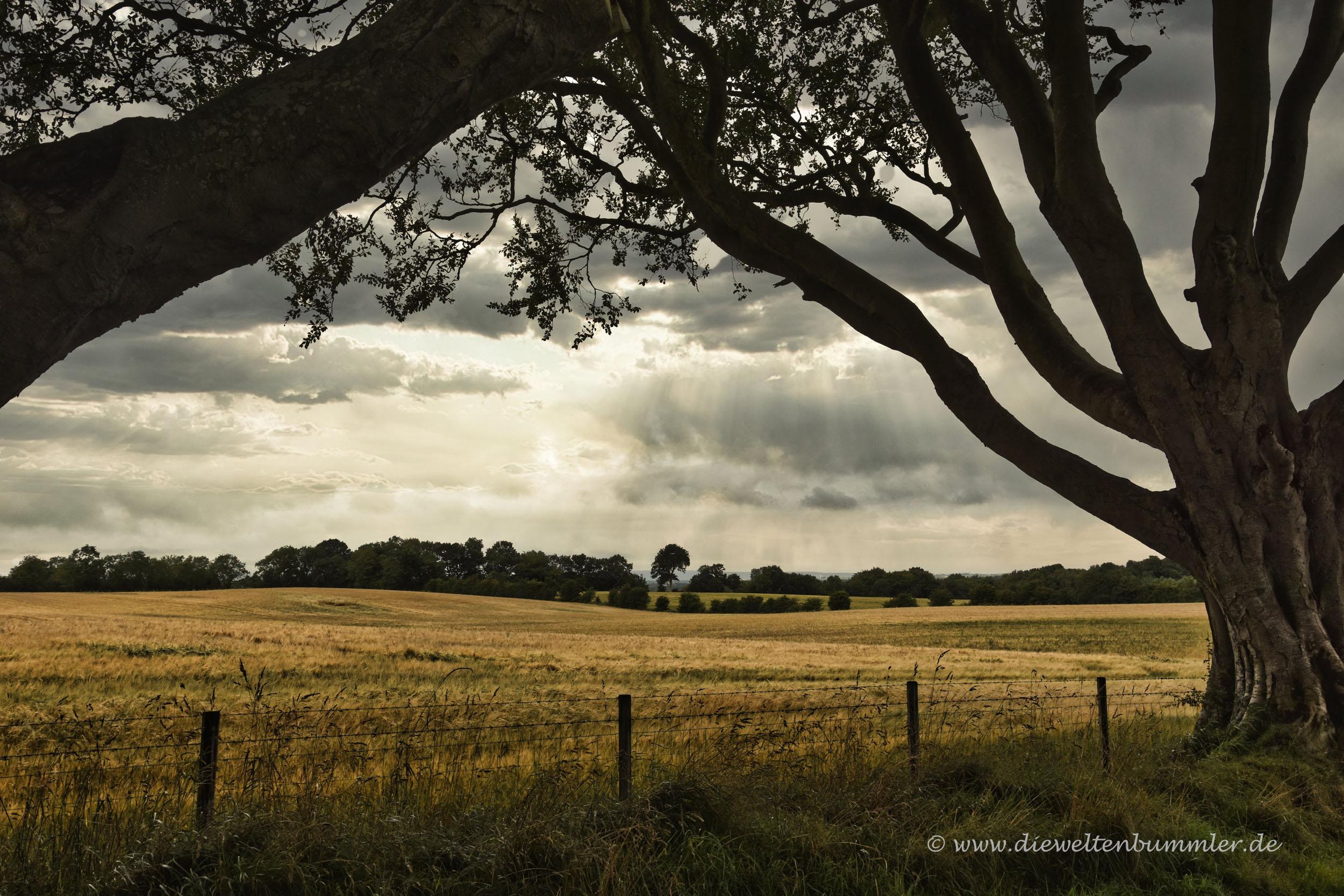 Landschaft rund um Dark Hedges