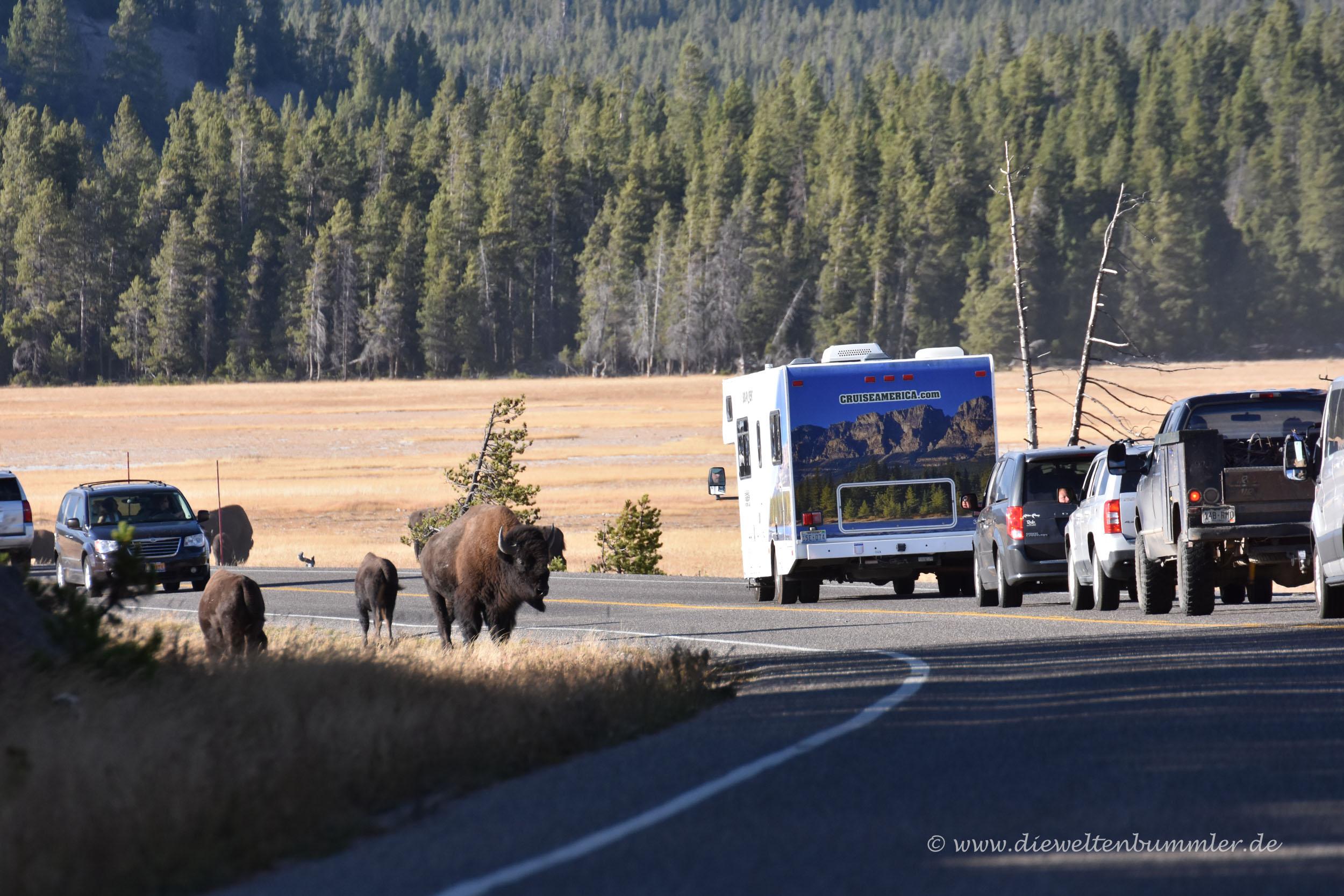 Unterwegs im Yellowstone