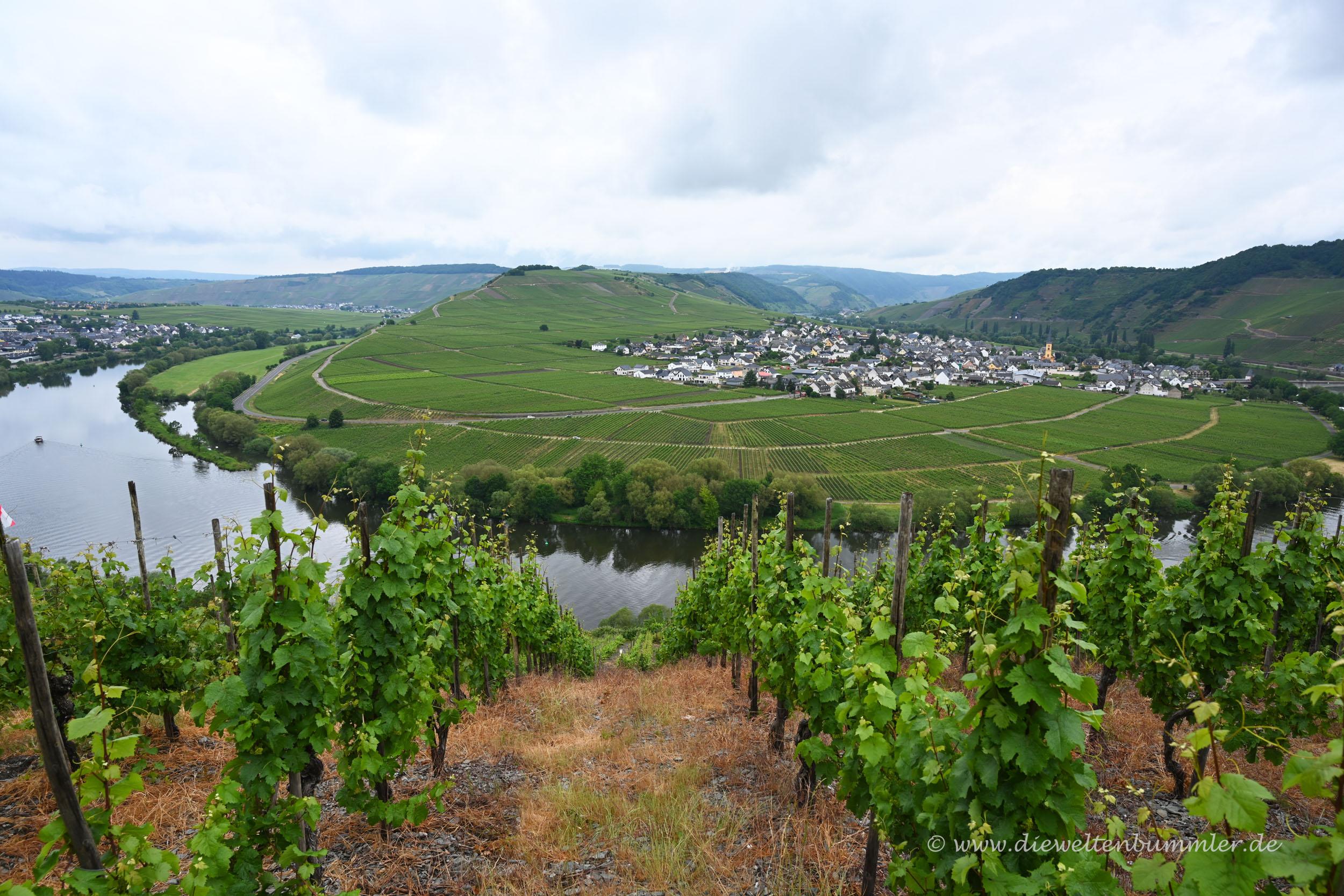 Moselschleife bei Trittenheim