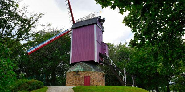 Windmühle De Nieuwe Papegaai