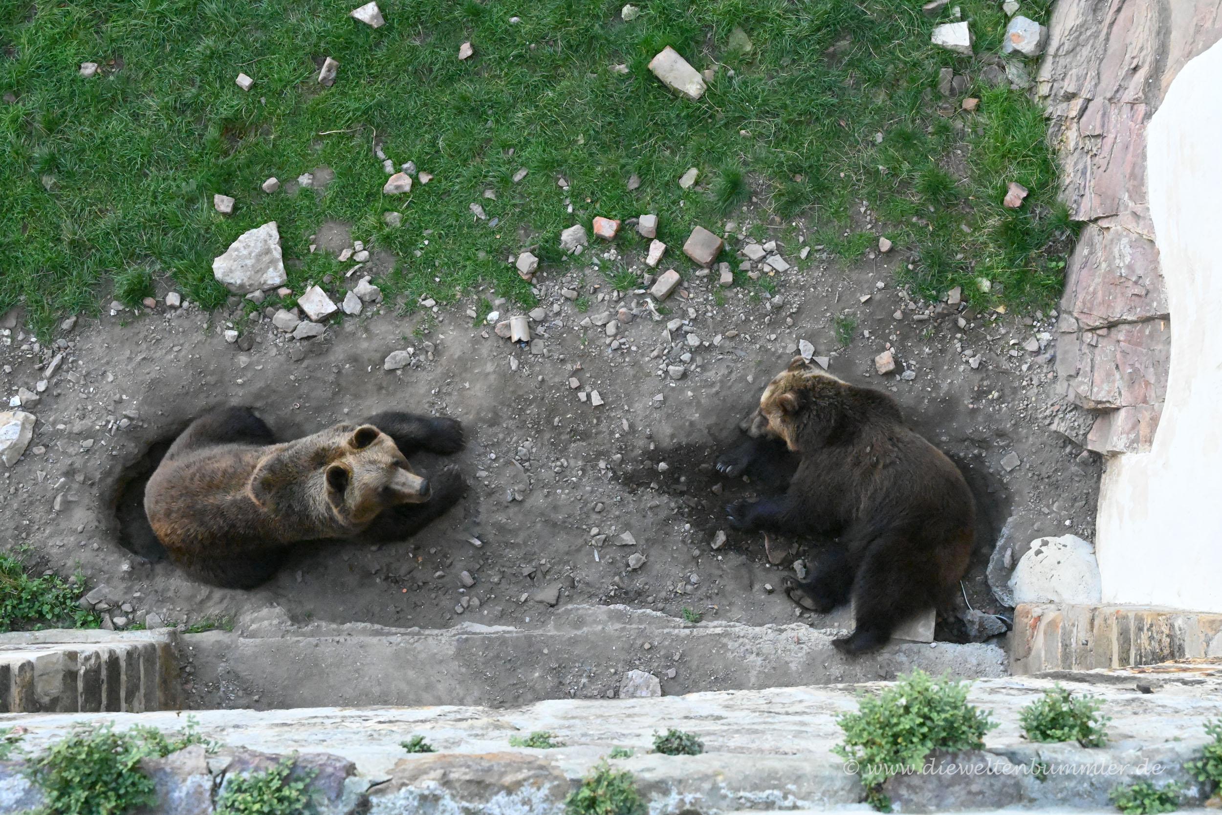 Bären im Schloss