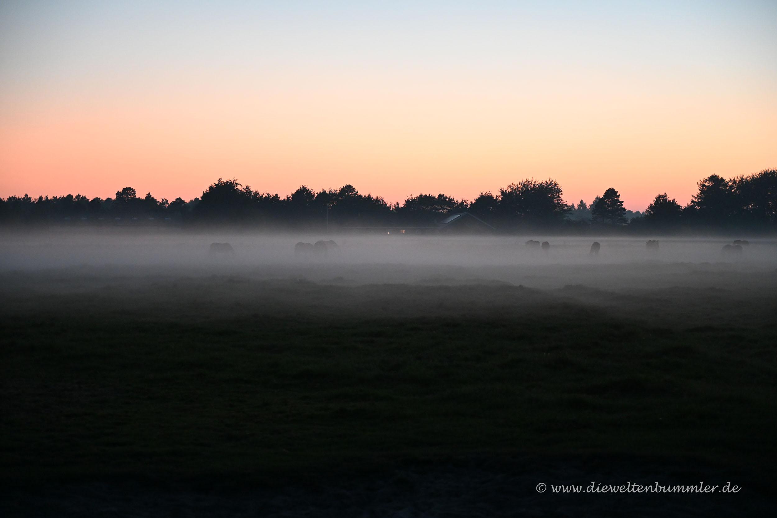 Pferde im Abendnebel