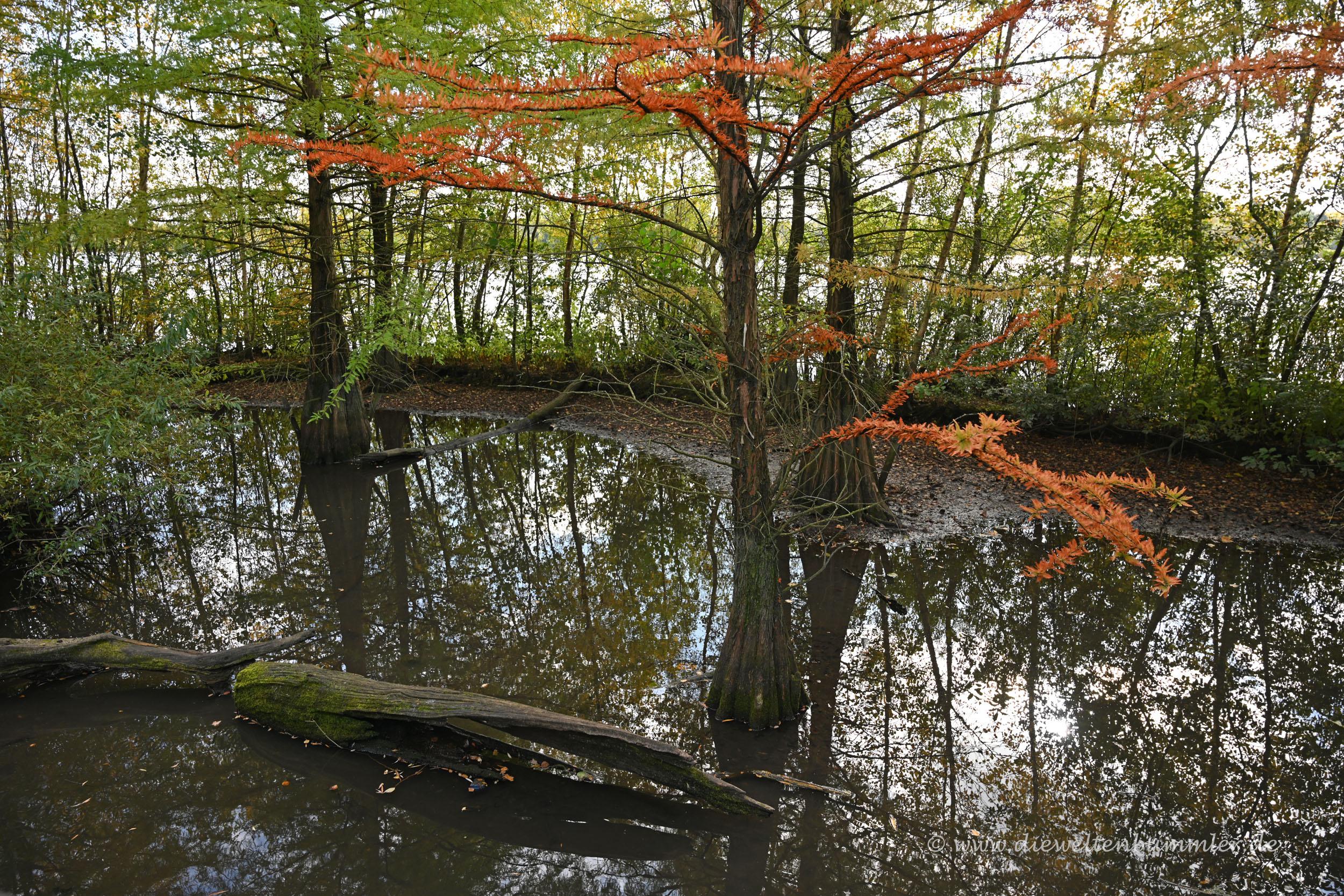 Wie Mangroven
