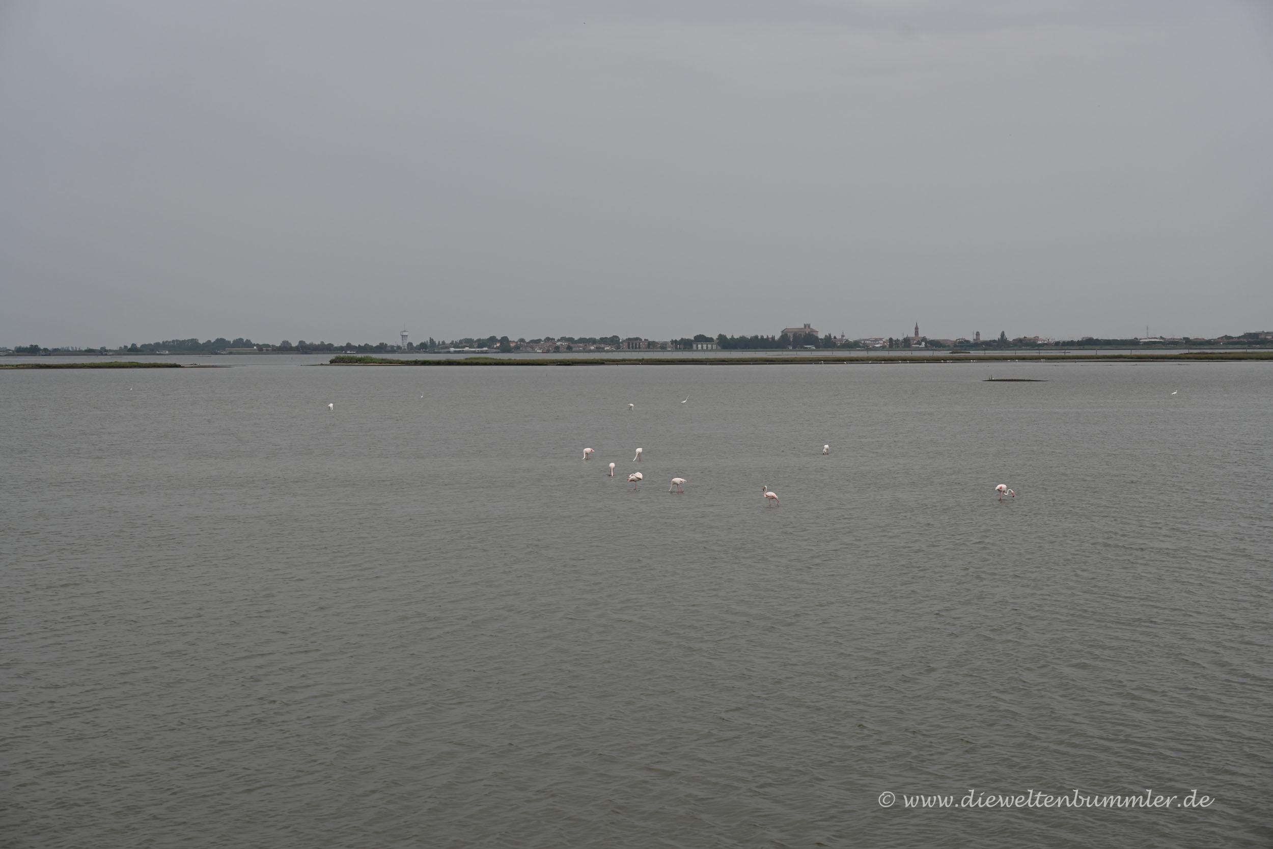Flamingos im Po-Delta bei diesigem Wetter
